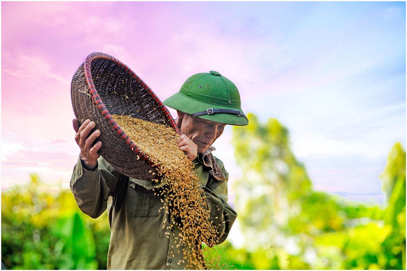 Nông sản Việt Nam nội công ngoại kích, nông dân lãnh đủ