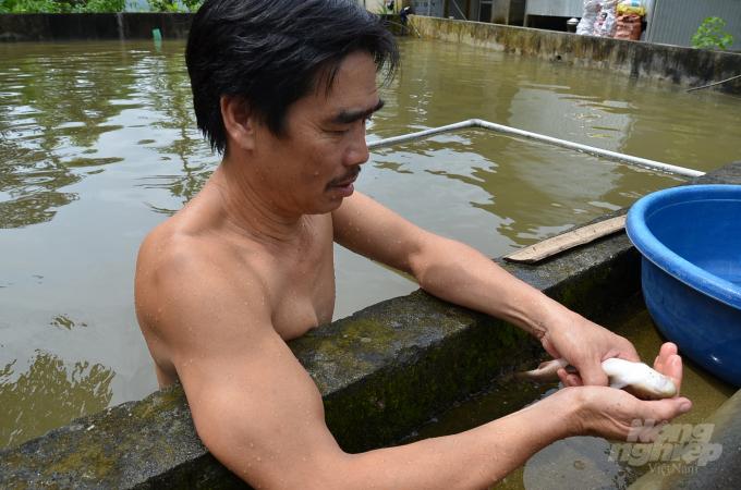 Anh Hòa đang bắt cá lên để kiểm tra