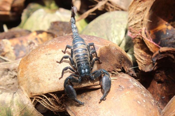 Sau khi thành công với mô hình nuối dế, anh Tùng tiếp tục nuôi bọ cạp. Ảnh: Nguyễn Vỹ.