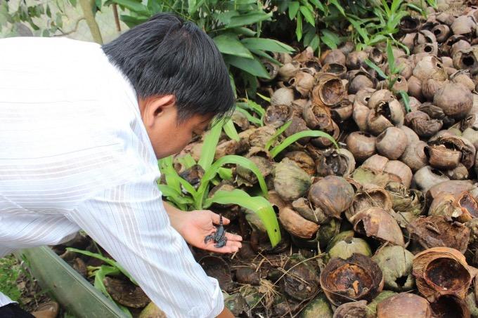 Theo anh Tùng, bọ cạp rất dễ nuôi, ăn tạp, không ăn thịt đồng loại nên có thể nuôi nhiều lứa cùng lúc, cùng 1 chuồng. Ảnh: Nguyễn Vỹ.