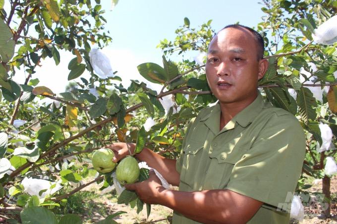 Anh Tài đã biến mảnh đắt cằn thành vườn quả ngọt. Ảnh: Mai Chiến.