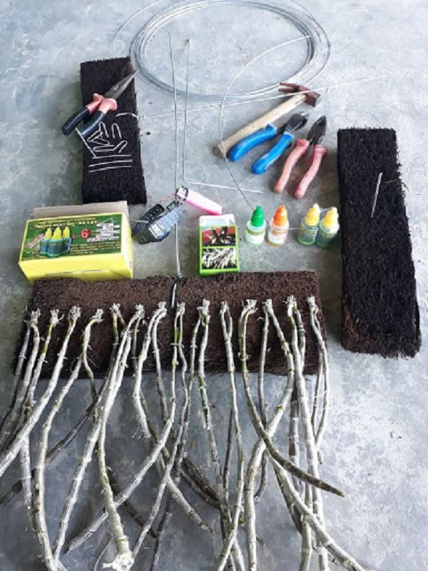 Dụng cụ trồng lan long tu